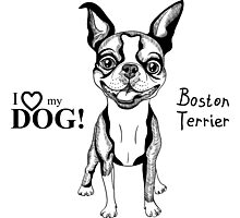 black and white Smiling dog Boston Terrier  Photographic Print