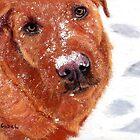 Snow Dog by Laura Gabel