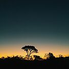 Silhouette of Tree After Sundown by visualspectrum