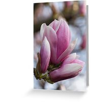 flowering magnolia tree Greeting Card