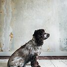 Profile of Cocker Spaniel Sitting in Shabby Apartment by visualspectrum