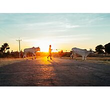 Silhouette of Boy Leading Cattle Across Road at Sunset in Burmese Countryside Photographic Print