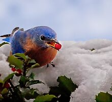 Berry Treat by Kathy Weaver