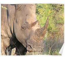 A rhino horn-how safe is it ? Poster