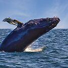 Whale Watching - Nova Scotia by Kathy Weaver