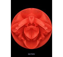 Spherical Red Rose  Photographic Print