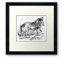 Vintage Border Collie Dog Illustration Retro 1800s Black and White Image Framed Print