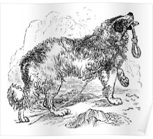 Vintage Border Collie Dog Illustration Retro 1800s Black and White Image Poster