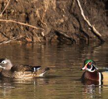 Wood  Ducks Sticker
