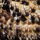 Great Horned Owl Feathers by Carol Bock