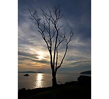 Tree In the Harbor Photographic Print