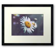 Night Daisy  Framed Print