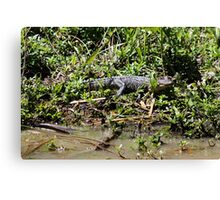 Guess What I See Canvas Print