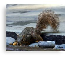 Squirrel in the Cold Canvas Print