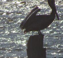 Perched Pelican Sticker