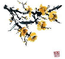 Yellow plum tree Photographic Print