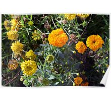 Beautiful yellow flowers in the garden. Poster