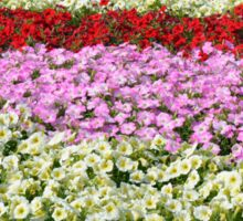 Beautiful colorful stripes of flowers. Sticker