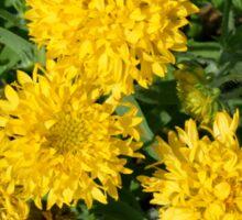 Yellow flowers in the garden. Sticker