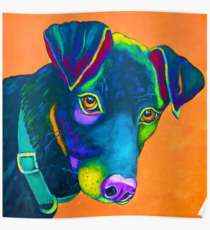 "Colourful Black Lab ""Cooper""  Poster"