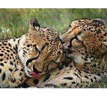 Cuddling Cats Photographic Print