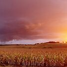 Fields of storms and sunshine by Penny Kittel