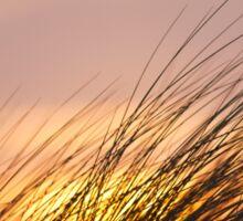 Dune Grass at Sunset Sticker