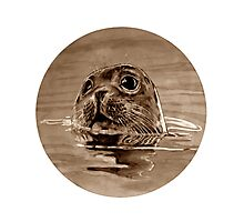 SEAL - sepia Photographic Print