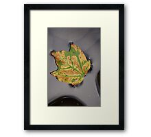 Fall Reflection 3 Framed Print