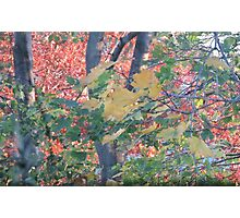 Autumn Leaves in Red, Gold, and Green Photographic Print
