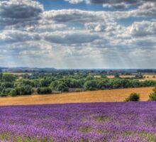 Lavender Farm Sticker