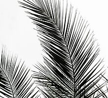 Palm Leaves by Mareike Böhmer