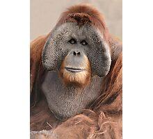 Male Sumatran Orangutan Photographic Print