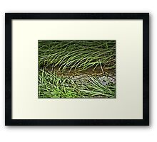 """A Streamlet Runs Through It""... prints and products Framed Print"