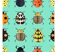 Insects. Photographic Print