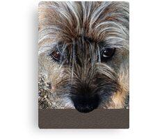 Border Terrier portrait Canvas Print