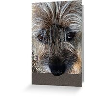 Border Terrier portrait Greeting Card