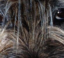 Border Terrier portrait Sticker