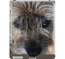 Border Terrier portrait iPad Case/Skin