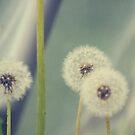 Tre amici by lumiwa