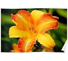 The Perfect Perennial - Yellow Lily Poster