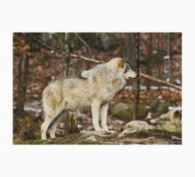 Solitary Timber Wolf Baby Tee