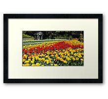 Tulips in the park Framed Print
