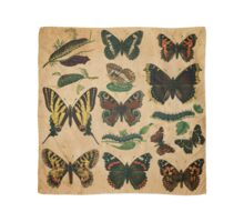 Vintage Butterflies and Moths 2 Scarf