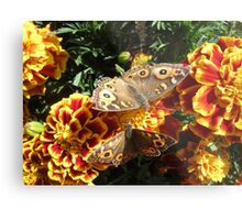 Meadow Argus Butterflies Metal Print