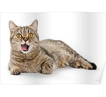 Red funny striped cat British Poster