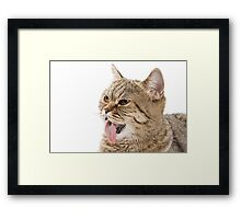 Red funny striped cat British Framed Print