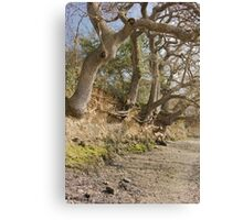 Exposed Roots At Low Tide Canvas Print