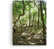 Jamberoo Bush Track Canvas Print