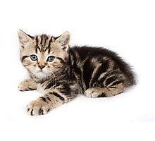 Striped cute  fluffy kitten Photographic Print
